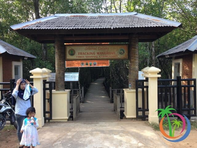 Tracking Hutan Mangrove desa komojan karimunjawa