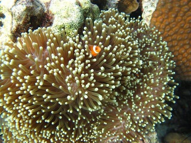 ikan hias dan terumbu karang karimunjawa