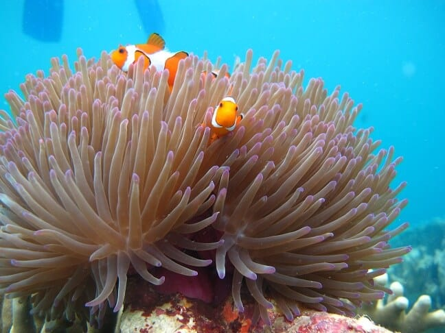 terumbu karang dan ikan hias karimunjawa