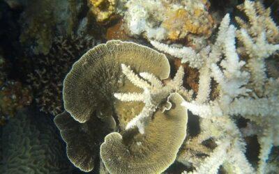 terumbu karang karimunjawa