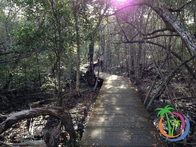 jembatan kayu hutan mangrove karimunjawa