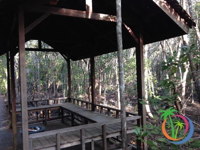persinggahan hutan mangrove karimunjawa